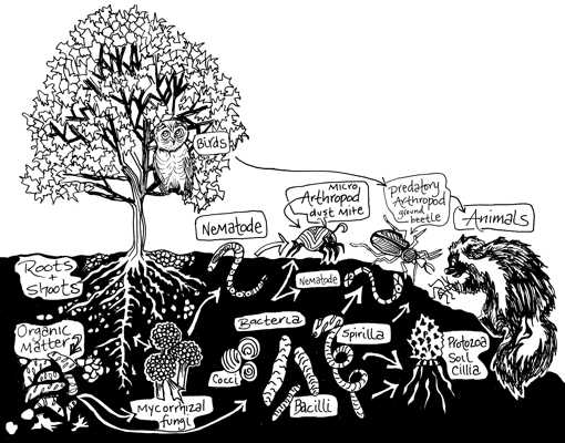 ogs microbes, soil food web image